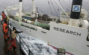 На 26/12/2008 Си Шеперд среќава јапонски брод за лов на китови. На Flickr од:guano.