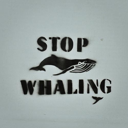 Прекинете го ловот на китови. На Flickr од: alisonlongrigg